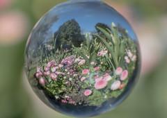 The Lightness of Being (Eiona R.) Tags: brynmill wales unitedkingdom gb swanseabotanicgardenssingleton singleton crystalball wfc