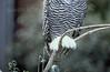 ZOO0030 (Akira Uchiyama) Tags: 動物たちのいろいろ 足 足シロフクロウ 足鳥類