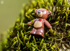 Lost Teddy (jezbags) Tags: lego legos toys toy canon60d canon 60d 100mm closeup upclose macro macrophotography macrodreams macrolego teddy bear garden green brown nature moss lonely lost