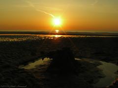 Belgian coast (Natali Antonovich) Tags: belgiancoast seasideresort seaside seashore seaboard northsea sea nature landscape sunset horizon water sun sky reflection parallels celestialmood