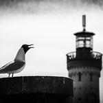 Die Möwe und der Turm