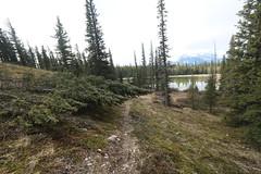 Yamnuska trails clearing and marking (davebloggs007) Tags: yamnuska trails alberta canada crescent lake