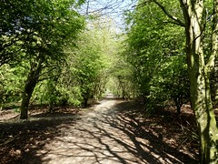 Witham Way Country Park (Jane Desforges) Tags: boston lincolnshire nature walk river witham trees shadows sunshine springtime