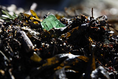 Ved fjorden (dese) Tags: strandvik bjørnefjorden grønt grøn grön green grün yaşıl yeşil verde vert fjord april14 2017 april 2017 vår spring primavera strand fjære fjøre sea beach inexplore explore