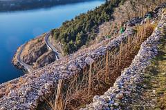 Bakarski prezidi 2017. (MountMan Photo) Tags: bakar bakarskiprezidi primorskogoranska croatia landscape vinograd more