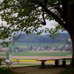 Rafz (zeh.hah.es.) Tags: rafz ktzh schweiz switzerland tree baum bank bench village dorf feld felder