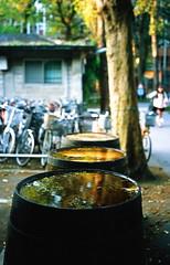 台灣大學_29 (Taiwan's Riccardo) Tags: 2017 taiwan 135film negative ps fujifilmrdpiii plustek8200i rolleiq35t rolleilens hft vario zoom apogon 3890mmf2856 台北市 台灣大學