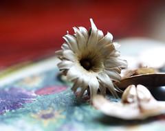 seed (Karen McQuilkin) Tags: macromonday seed