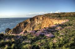 cliffs & flowers, on Alderney (neilalderney123) Tags: â©2017neilhoward alderney landscape cliff flowers wildflowers water olympus ©2017neilhoward
