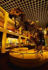 CU942488 (agathaumas) Tags: academyofnaturalsciencesofphiladelphia animal animals bones carnosaur cretaceousperiod dinosaur display extinctanimal fossil interior mesozoicera midatlantic museumexhibit naturalscience nobody northamerica pennsylvania philadelphia prehistoric saurischian science skeleton tyrannosaur tyrannosauridae tyrannosaurusrex usa