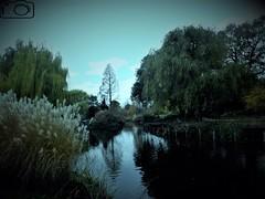 London (cosimocarbone) Tags: queen vacanza natura parco inghilterra londra regina london giardini