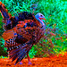 Psychedelic Turkey - 1st Place Altered/Composite - Beto Gutierrez