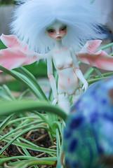 cottonwood9232 (1 of 1) (Catfishy2u) Tags: ivy bjd dollzone
