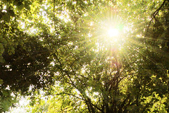 Hope (Aozma Qureshi) Tags: trees summer sun green sunshine forest star happiness sparkle rays yahoo:yourpictures=yourbest2014image