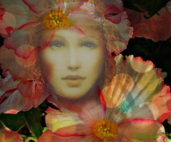 beauty 1 (Sonja Parfitt) Tags: flowers color beauty face manipulated bokeh