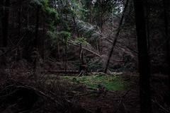 Clearing (Morten Bjerg) Tags: autumn trees light nature forest licht woods seasons herbst natur lys wald bäume skov hareskoven lichtung efterår skovbrynet årstider lysning jahrezeit mortenbjerg
