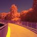 Lewis Ginter Botanical Gardens Infrared