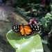 "Butterfly Conservatory • <a style=""font-size:0.8em;"" href=""http://www.flickr.com/photos/25269451@N07/15209238759/"" target=""_blank"">View on Flickr</a>"