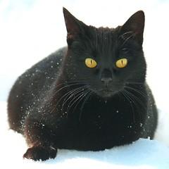 Anglų lietuvių žodynas. Žodis animal black reiškia gyvūnų juoda lietuviškai.