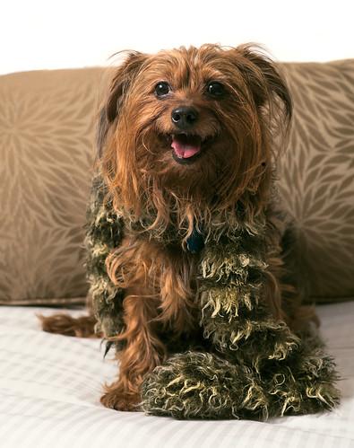 Happy Little Dog Wearing A Scarf
