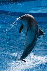 DSC04042 (rainandsteven) Tags: ocean park travel hongkong dolphin fe 70200 a7r sel70200