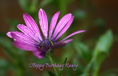 The happiest birthday for Nancy, a wonderful friend to all! (Lynn English) Tags: masterpiece bej happybirthdaydearnancy httpswwwflickrcomphotosturtlemomnancy