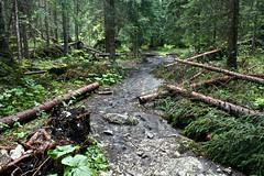 - - - (RossoGialloBianco) Tags: sentiero bosco fango tronchi