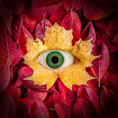 Eye of Autumn (Tortured Mind) Tags: autumn macro eye leaves square prime maple surreal 11 dslr d800 100mmf28