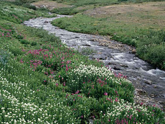 A creek running through the woods. (hollycolorado8022634) Tags: landscape sample