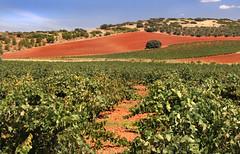 IMG_2175 Landscape country Ciudad Real NO 2 (jaro-es) Tags: españa nature canon landscape spain natur natura agriculture landschaft spanien agricultura naturesfinest spanelsko naturewatcher eos70d naturemaster