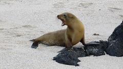 Galapagos - San Cristobal-28