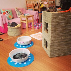 Cat cafe. Great lounge atmosphere... Although the patrons can be kind of catty at times. #tokyo #japan