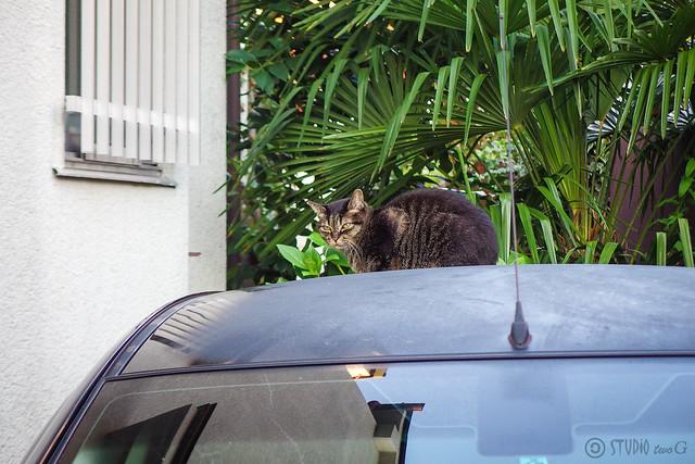 Today's Cat@2014-09-26