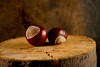 Conkers (A>M>S) Tags: stilllife horsechestnuts sonyalpha550