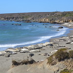 "Elephant Seal Vista Point <a style=""margin-left:10px; font-size:0.8em;"" href=""http://www.flickr.com/photos/127467040@N04/15385275122/"" target=""_blank"">@flickr</a>"