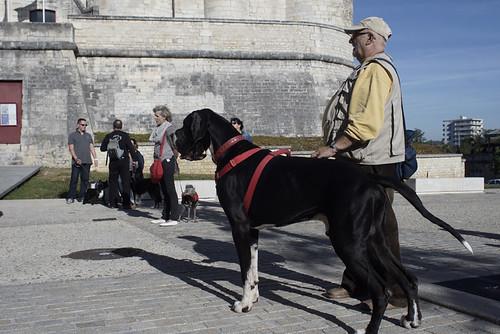 Séance d'éducation canine : Mairie de Niort