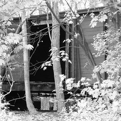 Trees engulf EBT boxcar (Thiophene_Guy) Tags: railroad blackandwhite bw abandoned neglect top decay union tracks rail east mount pa forgotten overexposed disused dual coal broad gauge derelict narrow ebt originalworks eastbroadtop sp550uz olympussp550uz thiopheneguy ebtrr oct2014