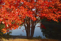 Red (Laurie Vezina) Tags: morning autumn trees red lake tourism nature water leaves maine lakes newengland east foliage vacationland thewaylifeshouldbe essenceofmaine mainelife