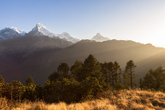 Golden Hour (Ali Sabbagh) Tags: sunrise landscape nepal poonhill mountains annapurna sun light trees pinetrees pine nature canon eos7d