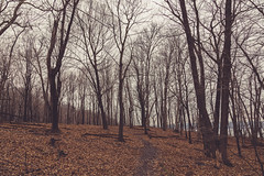 Hiking Trail at Frontenac State Park (Tony Webster) Tags: frontenac frontenacstatepark lakepepin minnesota mississippiriver river spring statepark unitedstates us