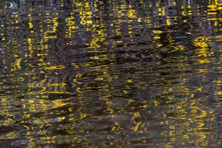 2017 090-365 Thursley reflections