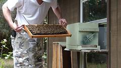 Observation hive (alansurfin) Tags: beekeeping beekeeper beehive beebox bees abeilles abejas bienen backyard honeybees apismellifera apiary