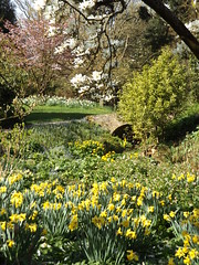 The Upper Stream Garden, Hidcote Manor Garden, Gloucestershire, 3 April 2017 (AndrewDixon2812) Tags: hidcote manor garden nationaltrust cotswold cotswolds chipping campden gloucestershire upper stream lawrence johnston