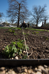 20170405-AMS-LSC-1976 (USDAgov) Tags: usda departmentofagriculture usdepartmentofagriculture peoplesgarden nationalmall washington dc planting seed sprout tools soil garden transplant plant align spring coolweather