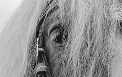 Ein Blick / A look (ludwigrudolf232) Tags: pferd einfarbig auge