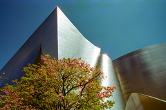 Tree at Disney Hall (LXG_Photos) Tags: cinestill50 disneyconcerthall downtown eos3 losangeles tree sky