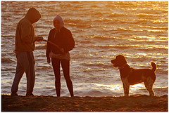 Practicing Patience (HereInVancouver) Tags: sunsetlight water ocean pacific englishbay dog couple candid beach streetphotography patience thingstodobythewater waves vancouver bc canada vancouverswestend canong3x framed