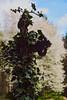 Hoffnung (grundi1) Tags: sony alpha 68 a68 ilca68 ilca landsee naturpark burgruine hoffnung hope sigma17702845 vanagram blätter leaves nature grün green sigma 1770 f2845