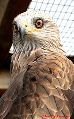 (73) Liberty's Owl Raptor & Reptile Centre