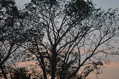 399882_2444799737919_1712069227_n (dhroobhbhattacherya) Tags: agartala tripura nature village